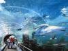 siam-ocean-world-in-bangkok