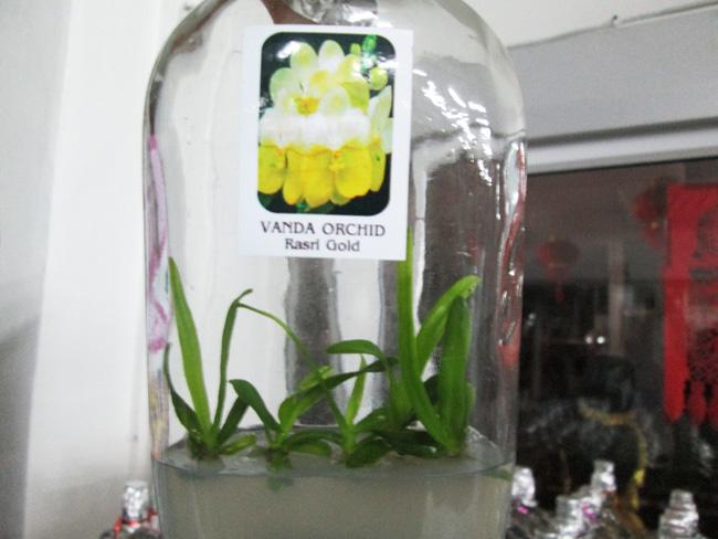thai_orchids_pattaya_02