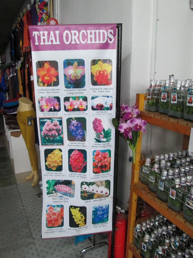 thai_orchids_pattaya_03