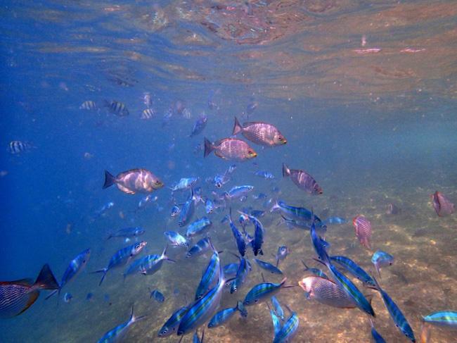 fish_phuket
