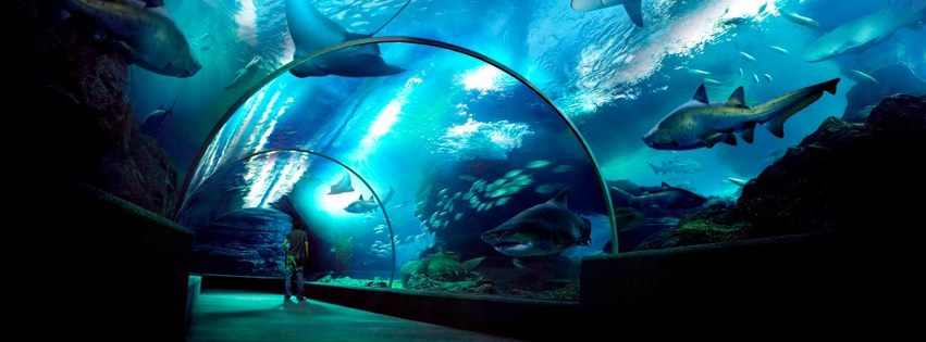 siam_ocean_world_glass_tunnel