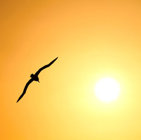 albatross_sunset_flight_small