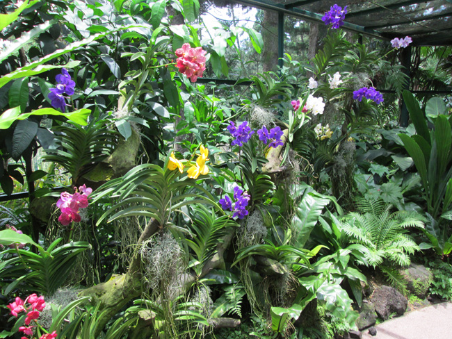 botanic_garden_01