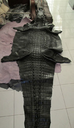 большая черная шкура сиамского крокодила с головой