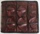 темно-коричневый муской кошелек из кожи сиамского крокодила с крупными спинными выростами