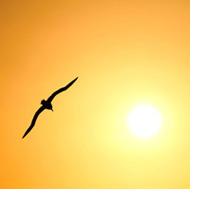 улетающая на зимовку птица