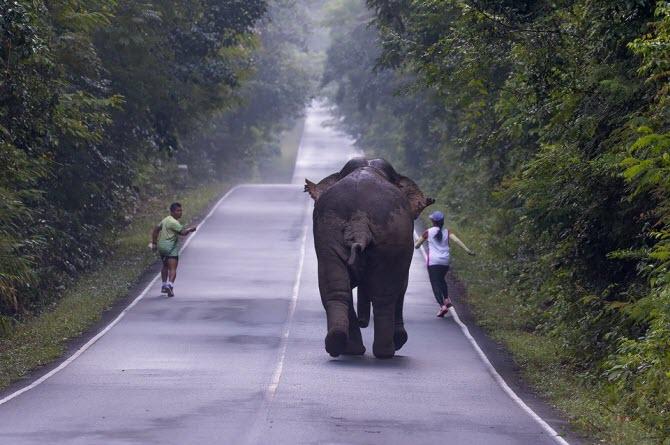 дикий слон гонится за туристами в национальном парке Таиланда