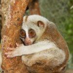 28 животных Таиланда, которых надо увидеть