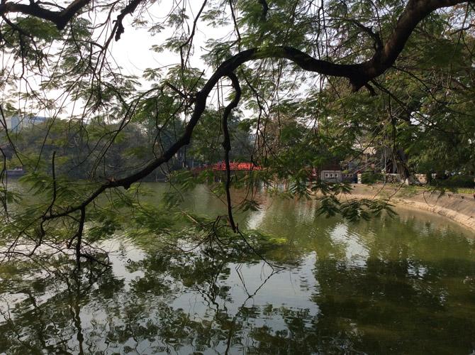 Ветви раскидистого дерева над водой озера Хоан Кием в старом городе, в центре столицы Вьетнама - города Ханой