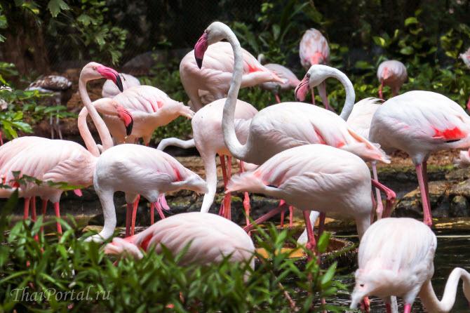 розовые фламинго в зоопарке Дусит в Бангкоке, столице Таиланда