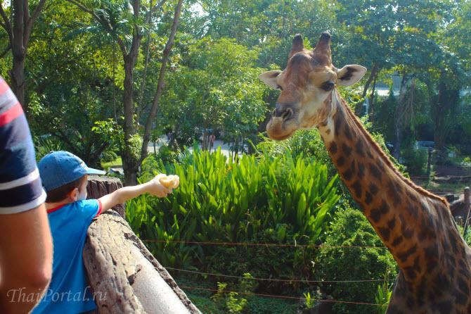 мальчик кормит жирафа в зоопарке Dusit Zoo