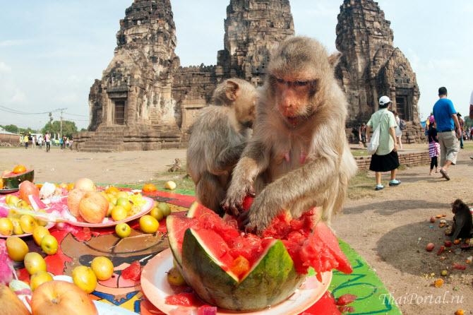 обезьяны радостно поедают арбузы и фрукты во время фестиваля в городе лопбури в таиланде