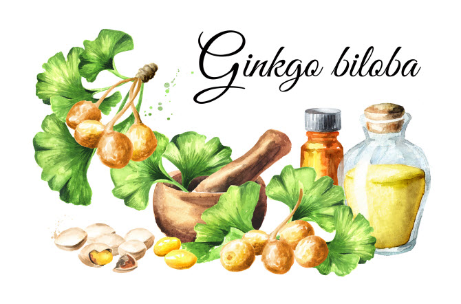 схема изготовления экстракта гинкго билоба